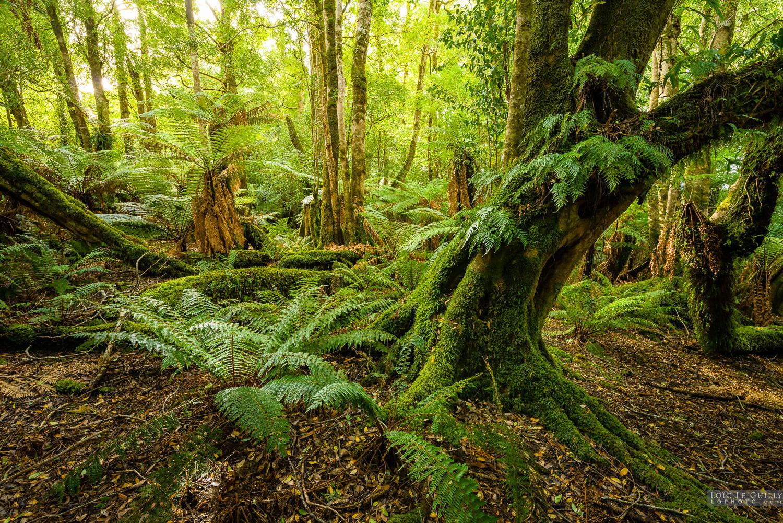 Blue Tier rainforest
