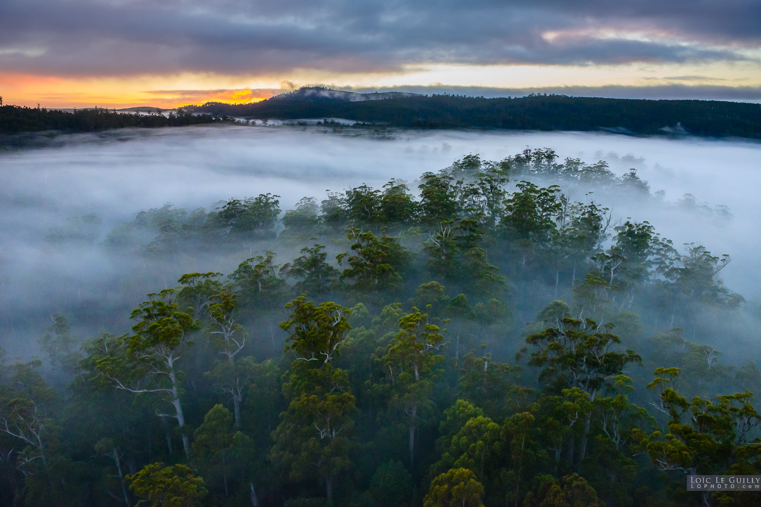 Morning fog over the Tarkine