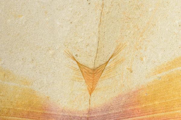 Maria Island sandstone detail