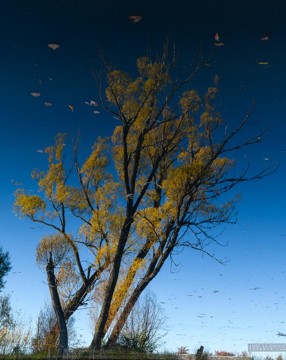 Vision of autumn