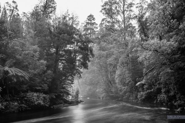 Black and white image of the Styx River lined with trees under the misty rain.